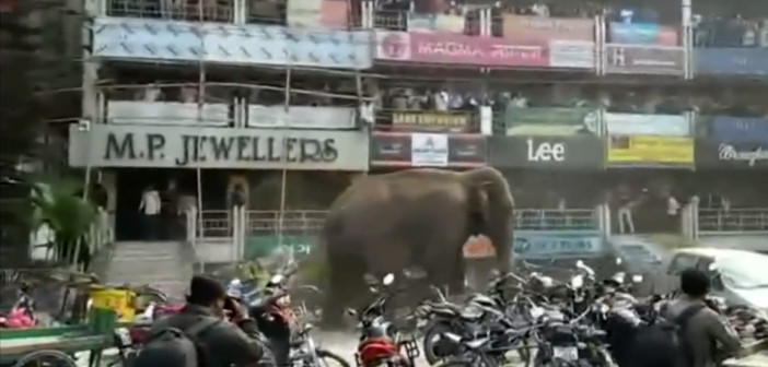 Elephant rampages in west Indian town, smashing homes