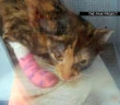 news-cats-declawing