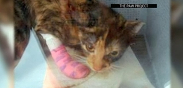 To claw or not to claw? NY cat proposal sparks frisky debate