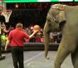 news-elephant-circus