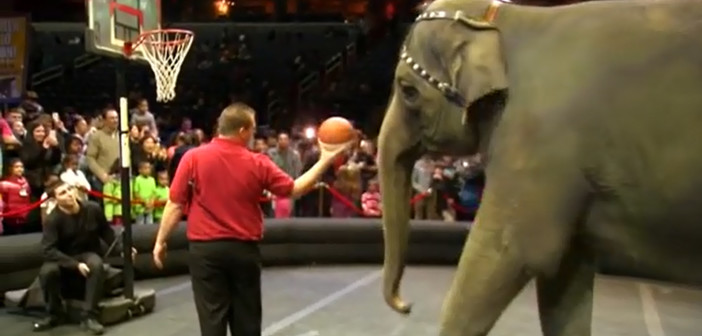 Final performance for Ringling Bros. elephants