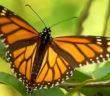 news-butterfly