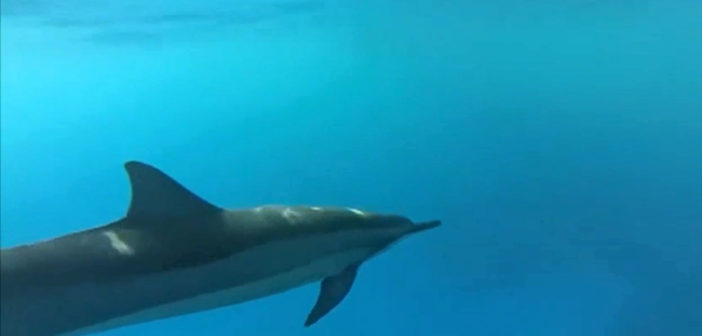 Feds propose ban on swims with Hawaii dolphins