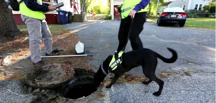 Dogs sniff out fecal pollution